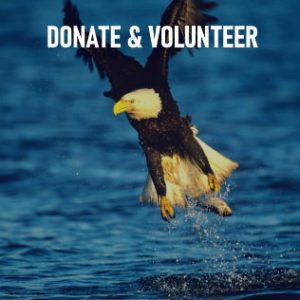 donate and volunteer