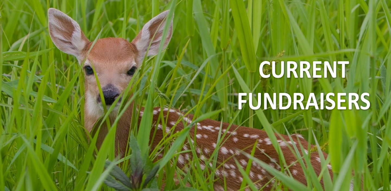 fawn fundraising header